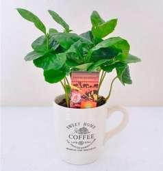 Кофе Арабика в кружке D9