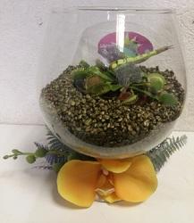 Флорариум с венериной мухоловкой #2