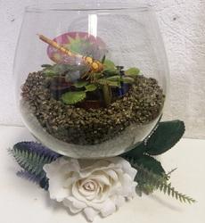 Флорариум с венериной мухоловкой #3