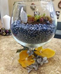 Флорариум с венериной мухоловкой #4