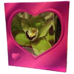 Орхидея в розовой коробочке