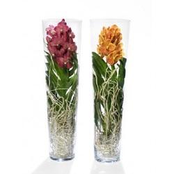 Орхидея Ванда в стекле Лизан