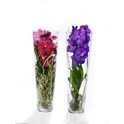 Орхидея Ванда в стекле Лизан H70