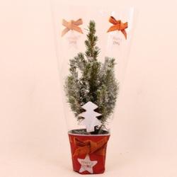 Пицея Глаука Коника в снегу в новогоднем пакете