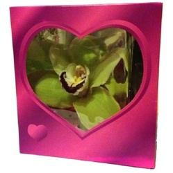 Орхидея в розовой коробочке (до 99 шт.)