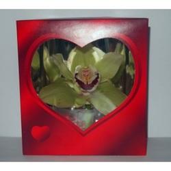 Орхидея в красной коробочке