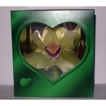 Орхидея в зеленой коробочке (от 100 до 199 шт.)