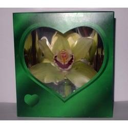 Орхидея в зеленой коробочке