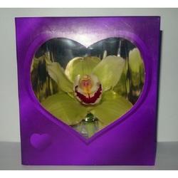 Орхидея в синей коробочке
